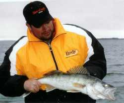 Lindy rigging For Walleyes