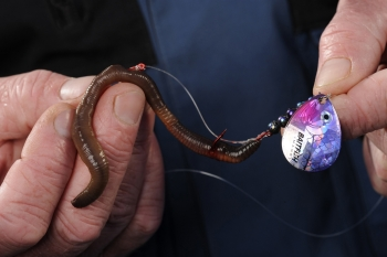 Meat and metal form a lethal alliance as a live bait spinner.